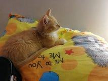 Rêves mignons de chat de chaton photographie stock