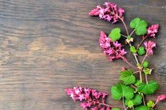 Ríbes dell'uva passa sui fiori rosa Fotografia Stock