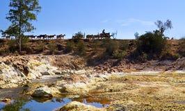 Río ácido caliente Tinto y manada de cabras fotografía de archivo libre de regalías