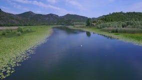 Río aéreo del tiroteo con los lirios verdes en superficie del agua metrajes
