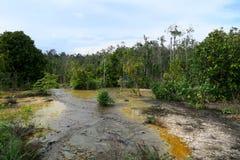 Río agradable que atraviesa la selva Fotografía de archivo