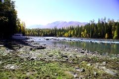 Río al lado del bosque Imagenes de archivo