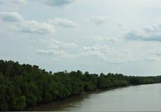 Río alineado árbol Foto de archivo libre de regalías