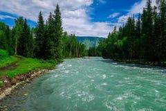 Río azul del bosque hermoso R?o de Kucherla en el parque nacional de Belukha, monta?as de Altai, Siberia, Rusia fotografía de archivo
