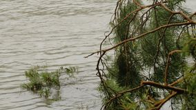 Río bajo del bosque con un árbol caido de la conífera metrajes