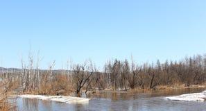 Río Barga después de abrir en el territorio de Zelenogorsk Krasnoyarsk Foto de archivo libre de regalías