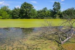 Río Bosut en Vinkovci Foto de archivo