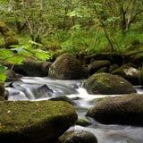 Río Bovey Foto de archivo libre de regalías