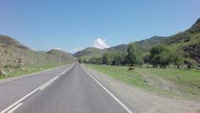 Río Chuya de la montaña a lo largo de Chuysky Trakt almacen de metraje de vídeo
