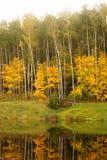 Río con Autumn Trees Imagen de archivo