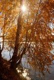 Río con Autumn Trees Foto de archivo