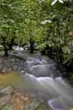 Río a través del bosque imagen de archivo