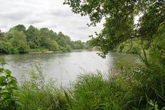 Río con la hierba y árboles bajo un cielo cubierto Imágenes de archivo libres de regalías