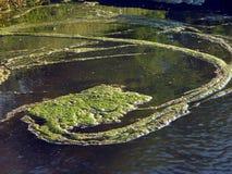 Río con la lenteja de agua Fotos de archivo