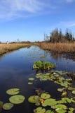 Río con las pistas de lirio - pantano de Suwanee de Okefenokee Fotografía de archivo libre de regalías