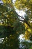 Río con los árboles Foto de archivo