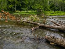 Río con los árboles caidos y la pequeña serpiente foto de archivo libre de regalías