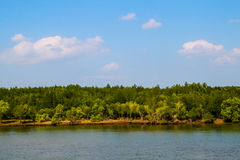 Río con los árboles del mangle y el cielo azul Imagenes de archivo