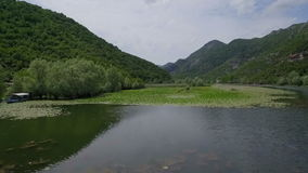 Río con los lirios verdes en superficie del agua almacen de video