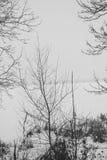 Río congelado en la nieve con vistas a la costa de las cañas Fotos de archivo libres de regalías