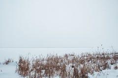 Río congelado en la nieve con vistas a la costa de las cañas Imágenes de archivo libres de regalías