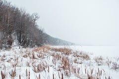Río congelado en la nieve con vistas a la costa de las cañas Imagen de archivo libre de regalías