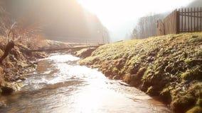 Río corriente cerca del bosque almacen de video