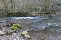 Río corriente en bosque Imágenes de archivo libres de regalías