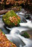 Río cubierto de musgo del arroyo de Autumn Leaves Forest Stream Bubbling de la caída fotos de archivo libres de regalías