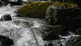 Río cubierto de musgo de la montaña almacen de video