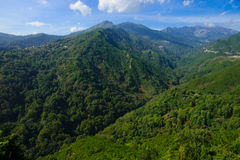 Río de Alesani Imagen de archivo