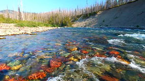Río de cabeza llana Montana de North Fork Fotografía de archivo libre de regalías