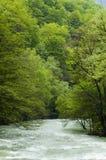 Río de Cerna en Rumania Imagen de archivo libre de regalías
