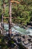 Río de Chulcha, Altai Fotografía de archivo