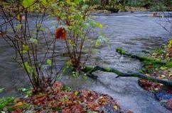 Río de Goldstream en la inundación en el otoño Foto de archivo