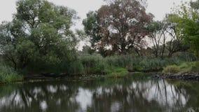 Río de Havel el barco es conducción, pasando por paisaje típico con los prados y los intentos del sauce Región de Havelland alema almacen de video