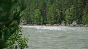 Río de Katun en Altai en el verano almacen de metraje de vídeo
