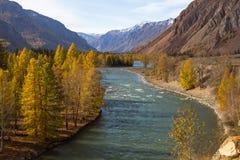 Río de Katun en el otoño en la república de Altai Fotografía de archivo