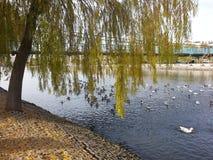 Río de Kizilirmak Fotos de archivo