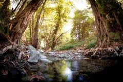 Río de Krios cerca del pueblo de Platres Distrito de Limassol, Chipre Fotografía de archivo