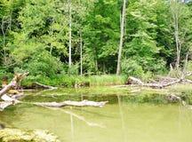 Río 7 de Krutynia Foto de archivo libre de regalías