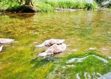 Río 14 de Krutynia Foto de archivo
