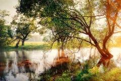 Río de la mañana Imagen de archivo