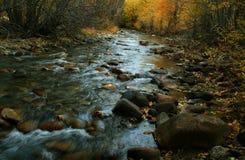 Río de la madera Imagen de archivo