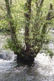 Río de la montaña Fotos de archivo