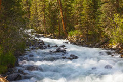 Río de la montaña Agua rápida de la corriente Rusia Altai Imágenes de archivo libres de regalías