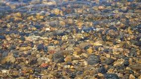 Río de la montaña, con la agua fría clara Parte inferior transparente, piedras del río metrajes