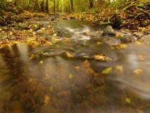 Río de la montaña con bajo del agua, grava con las primeras hojas coloridas Rocas y cantos rodados cubiertos de musgo en la orill Foto de archivo