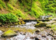 Río de la montaña con las cascadas en el bosque fotografía de archivo libre de regalías