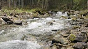 Río de la montaña con las rocas y el musgo almacen de metraje de vídeo